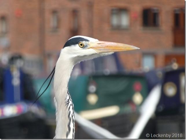 Fishing heron in the basin